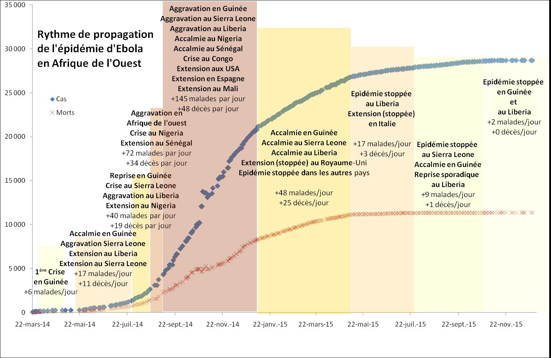 Rythme de propagation du virus Ebola pendant l'épidémie de 2014-2015